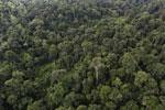 Borneo rainforest -- sabah_aerial_2640
