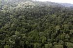 Borneo rainforest -- sabah_aerial_2641