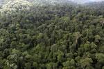 Borneo rainforest -- sabah_aerial_2642