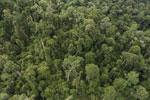 Borneo rainforest -- sabah_aerial_2643