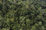 Borneo rainforest -- sabah_aerial_2644