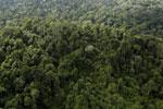 Borneo rainforest -- sabah_aerial_2645