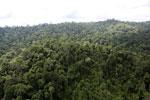 Borneo rainforest -- sabah_aerial_2646