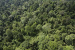 Borneo rainforest -- sabah_aerial_2647