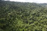Borneo rainforest -- sabah_aerial_2650
