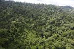 Borneo rainforest -- sabah_aerial_2651