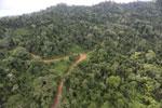 Logging road -- sabah_aerial_2652