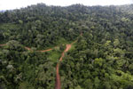 Logging road -- sabah_aerial_2654