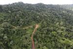 Logging road -- sabah_aerial_2655