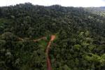 Logging road -- sabah_aerial_2656