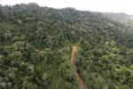 Logging road -- sabah_aerial_2657