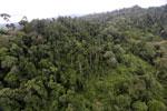 Logged over forest -- sabah_aerial_2659