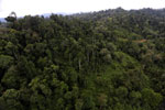 Logged over forest -- sabah_aerial_2661