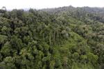 Logged over forest -- sabah_aerial_2662
