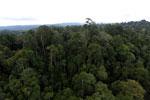Borneo rainforest -- sabah_aerial_2663
