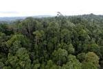 Borneo rainforest -- sabah_aerial_2664