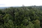 Borneo rainforest -- sabah_aerial_2665