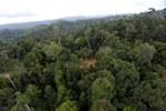 Logging road -- sabah_aerial_2667