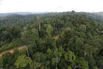 Logging road -- sabah_aerial_2668