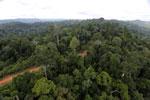 Logging road -- sabah_aerial_2669
