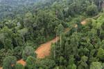 Logging road -- sabah_aerial_2672