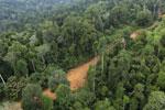 Logging road -- sabah_aerial_2673