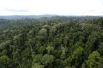 Borneo rainforest -- sabah_aerial_2677