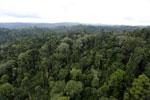Borneo rainforest -- sabah_aerial_2678