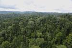 Borneo rainforest -- sabah_aerial_2679