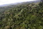 Borneo rainforest -- sabah_aerial_2680