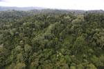 Borneo rainforest -- sabah_aerial_2684