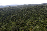 Borneo rainforest -- sabah_aerial_2687