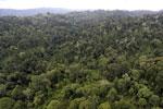 Borneo rainforest -- sabah_aerial_2688