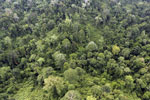 Aerial view of heavily logged rainforest -- sabah_aerial_2689