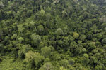 Aerial view of heavily logged rainforest -- sabah_aerial_2690