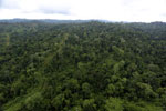 Aerial view of heavily logged rainforest -- sabah_aerial_2692