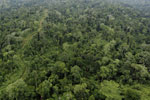 Aerial view of heavily logged rainforest -- sabah_aerial_2693