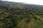 Aerial view of heavily logged rainforest -- sabah_aerial_2697