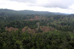 Aerial view of heavily logged rainforest -- sabah_aerial_2698