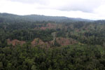 Aerial view of heavily logged rainforest -- sabah_aerial_2699