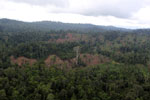Aerial view of heavily logged rainforest -- sabah_aerial_2700
