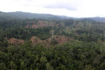 Aerial view of heavily logged rainforest -- sabah_aerial_2703