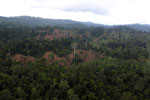 Aerial view of heavily logged rainforest -- sabah_aerial_2704