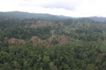 Aerial view of heavily logged rainforest -- sabah_aerial_2705