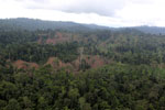 Aerial view of heavily logged rainforest -- sabah_aerial_2706