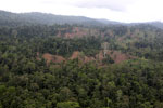 Aerial view of heavily logged rainforest -- sabah_aerial_2707