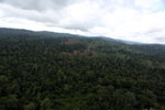 Aerial view of heavily logged rainforest -- sabah_aerial_2708