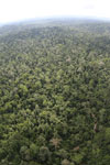 Aerial view of heavily logged rainforest -- sabah_aerial_2716