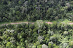 Aerial view of heavily logged rainforest -- sabah_aerial_2718