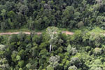 Aerial view of heavily logged rainforest -- sabah_aerial_2720